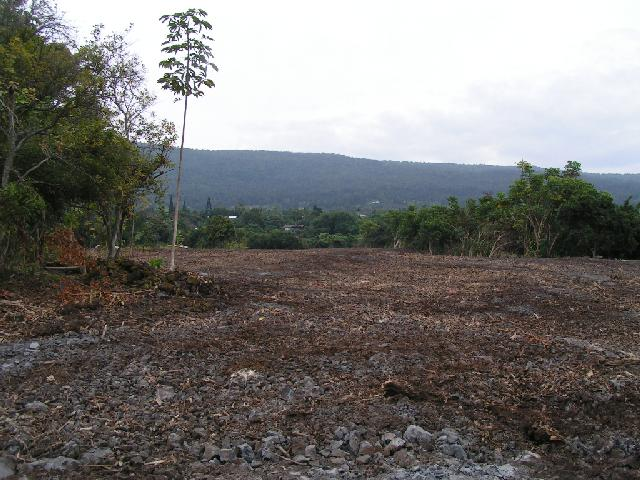 Land cleared for new coffee